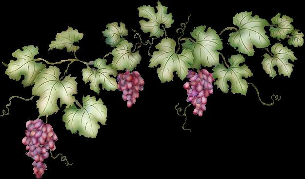 Grape Vine Pictures Clip Art Photos Images Car