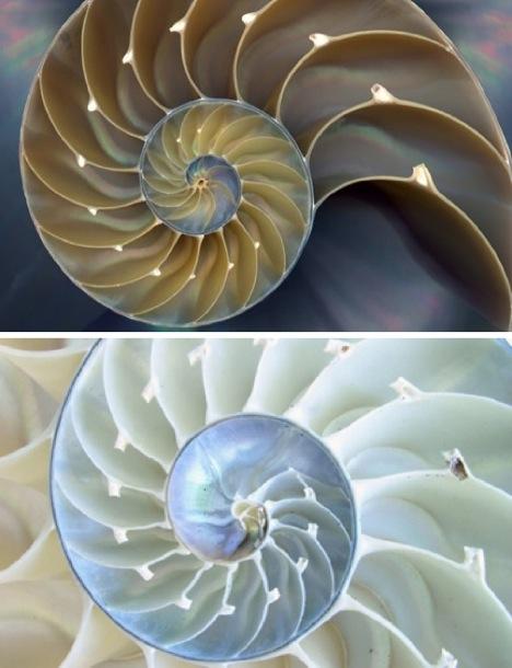 sea shell fractal - webecoist